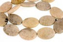 Coral fossil, flat oval, grey, 25x18mm