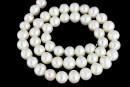 Perle de cultura - 7.5-8mmx6.5mm, alb
