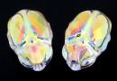 Swarovski, margele Scarab aurore boreale, 12mm - x1